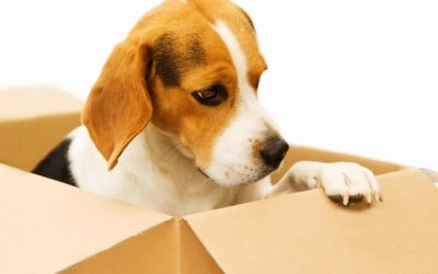 Tips on Moving Home with Pets